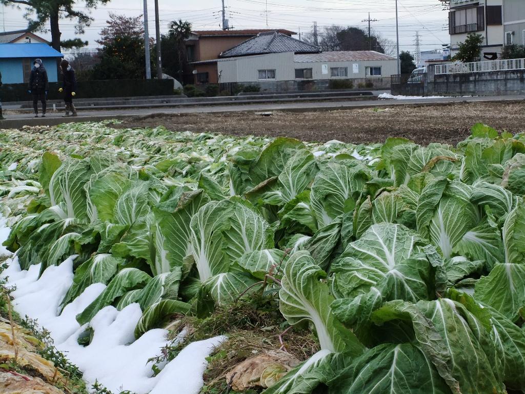 日本列島グンと冷え込み